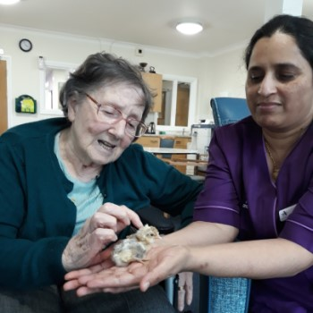 Chicks hatch at Bluegrove House care home