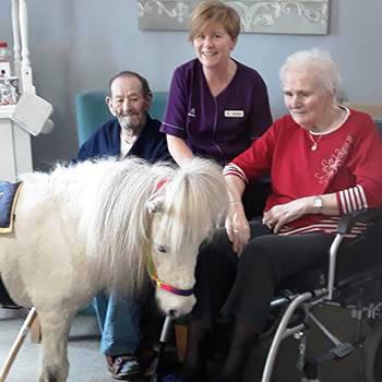 Pony at Oakwood Grange